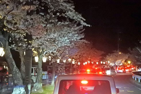 千光寺公園の夜桜、駐車場は混み合い渋滞も