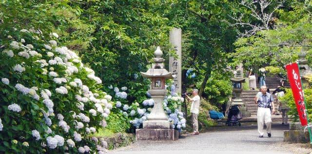 広島 神宮寺のアジサイ祭り