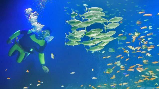 マリホ水族館が2周年、夜のショーリニューアル・お茶会も開催