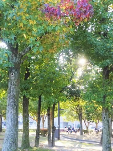 西条中央公園 散歩コース02