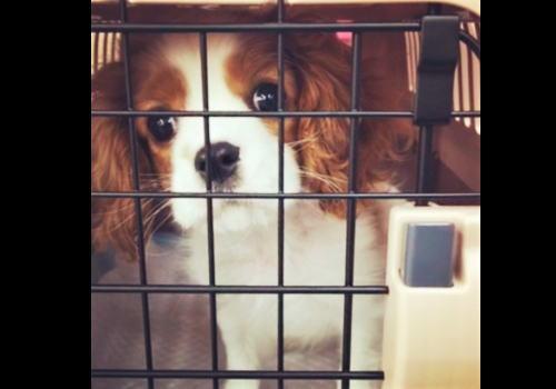 避難所へのペット 同伴避難場所を尾道市が発表、飼い主は備えたい「同行避難」