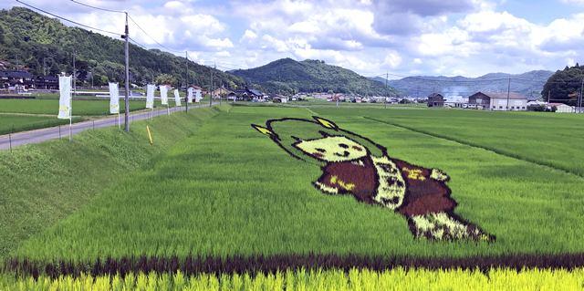 田んぼアート安芸高田市で「たかたん」鮮やか