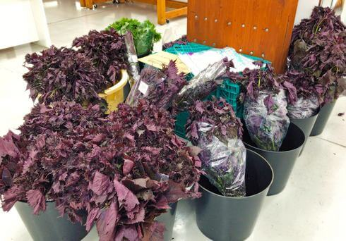 赤紫蘇も束で販売、八千代産直市場(広島県安芸高田市)