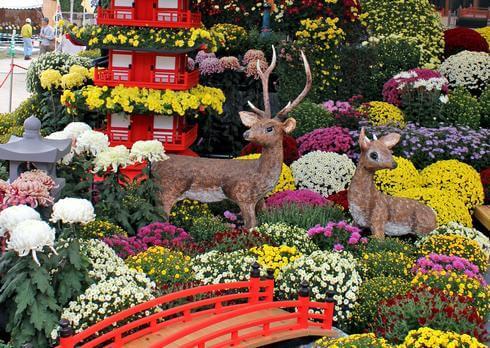 広島の菊花展まとめ、広島城など各地で菊の祭典