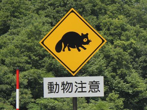 動物注意、飛び出し標識看板 タヌキ