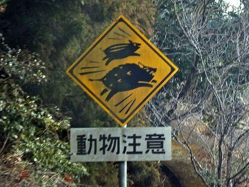 動物注意、飛び出し標識看板 長崎のイノシシ