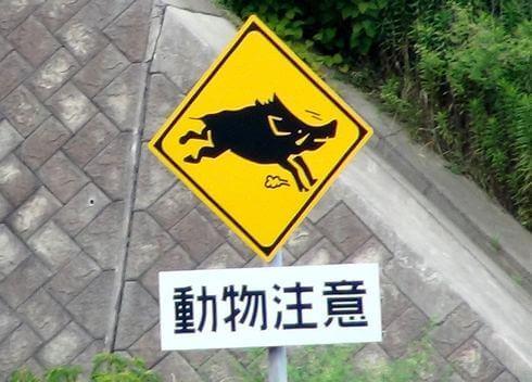動物注意、飛び出し標識看板 イノシシ