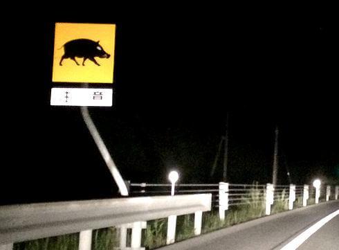 動物注意、飛び出し標識看板 北広島のイノシシ