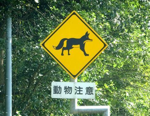 動物注意、飛び出し標識看板 キツネ