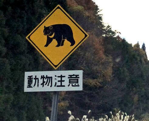 動物注意、飛び出し標識看板 クマ(吉和)