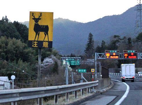 動物注意、飛び出し標識看板 シカ