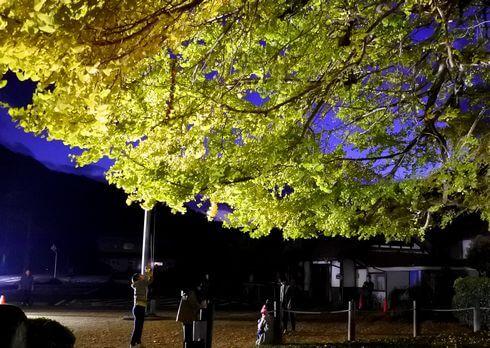 筒賀の大銀杏 ライトアップ