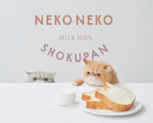 ねこねこ食パン がかわいい、高級食パン専門店 広島初上陸