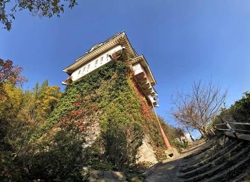 尾道城の石垣には、蔦がビッシリ