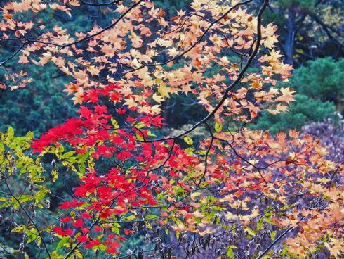 三段峡の魅力的な風景と紅葉2
