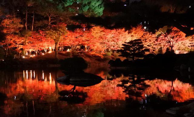 縮景園 もみじまつり、紅葉ライトアップで艶やか!庭園の美しき秋の風景
