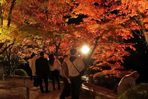 お見事!広島・縮景園の紅葉ライトアップが美しい