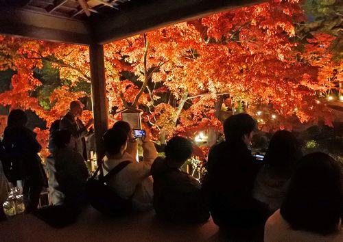広島・縮景園の紅葉が美しい!ライトアップで庭園が真っ赤に染まる風景