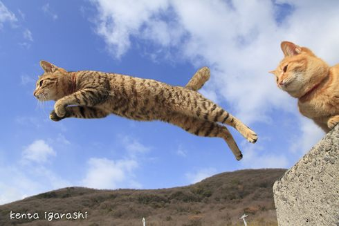 飛び猫写真展!ジャンプするネコを追う五十嵐健太の写真展、広島・宮城・秋田で開催