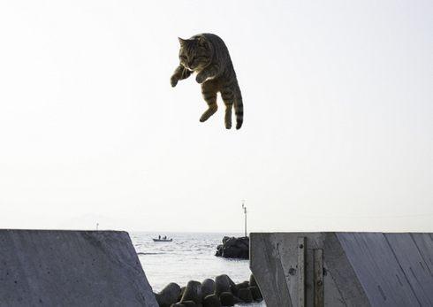 飛び猫写真展!五十嵐健太の写真展、広島・宮城・秋田で開催