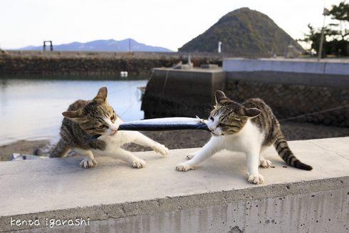 五十嵐健太の飛び猫写真展、広島で開催