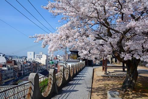 宝土寺の桜02