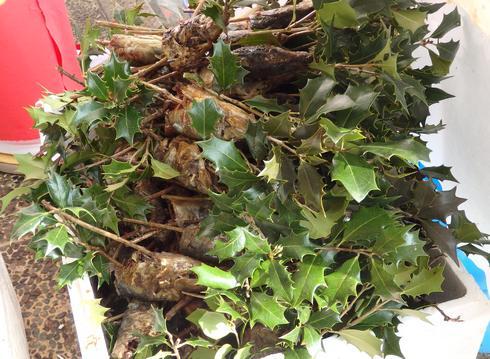 焼かれたイワシの頭をヒイラギの枝に刺す