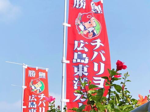 カープ沖縄キャンプ イメージ写真