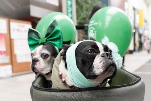 緑のライトアップ・仮装、イベントは「セントパトリックスデー」、東京・横浜・広島など日本各地で
