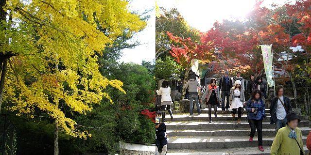 大聖院 紅葉シーズン