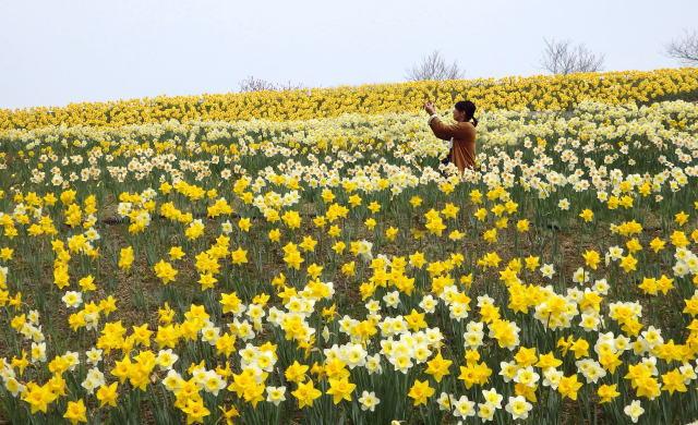 密を避けて広大な庄原へ!元気もらえる花春の花リレー