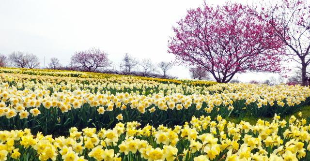 庄原花たびキャンペーン 写真1 備北丘陵公園