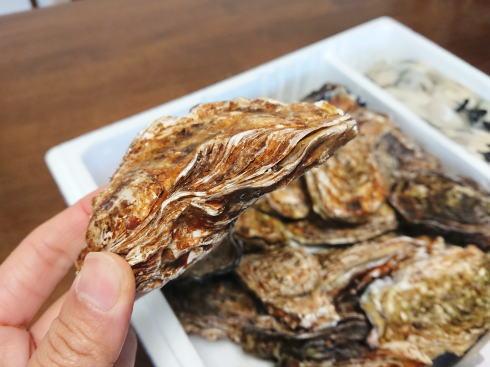 殻付き牡蠣の食べ方 殻の丸みがある方が下