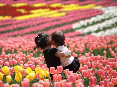 世羅高原が臨時休園、チューリップなど切り花販売で支援呼びかけも