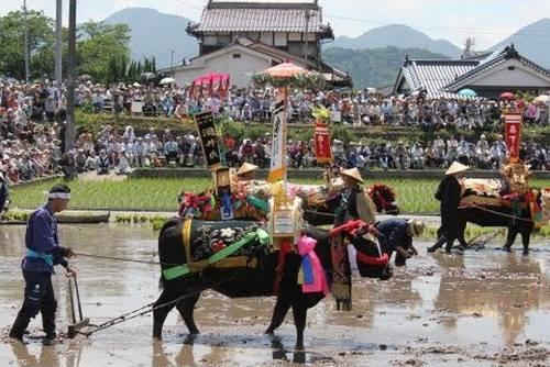 壬生の花田植、6月開催イベントの中止が決定