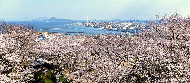 亀居公園の展望エリアから見渡す桜の景色