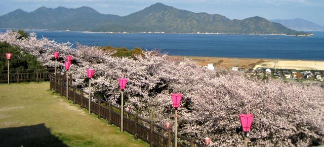 大竹市・春の亀居公園、桜とパノラマ風景