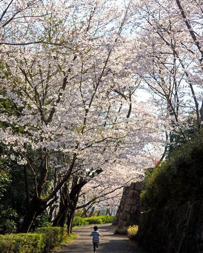 亀居公園、桜のトンネルと少年