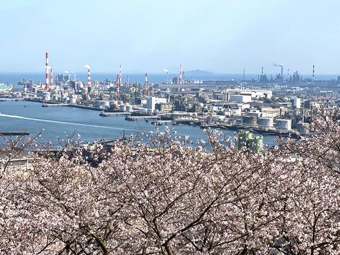 大竹・亀居公園で満開の桜と大竹工場と瀬戸内海の風景