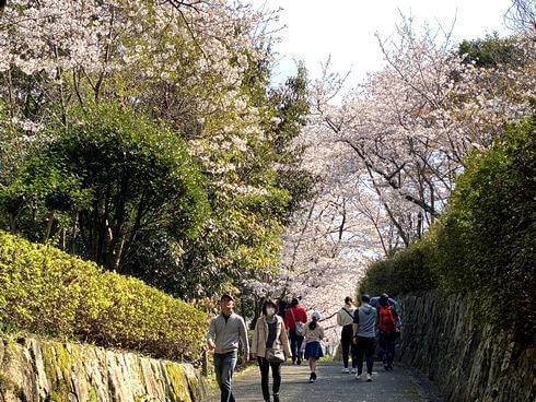 亀居公園の駐車場から歩いて展望エリアへ