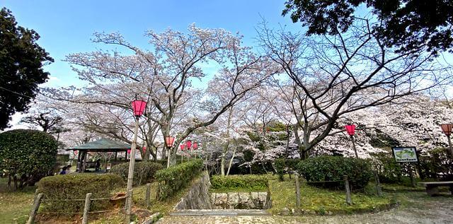 亀居公園の桜が満開!
