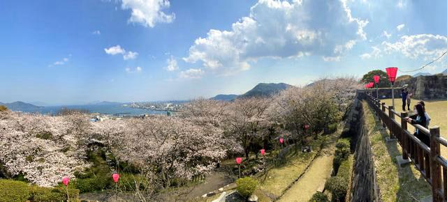 亀居公園の桜とパノラマ風景