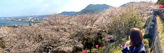 大竹市・亀居公園の桜が満開!城跡からの展望が気持ちいい桜スポット