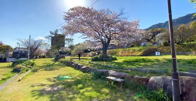 桜と緑が爽やかな、宮浜温泉グラウンドゴルフ場の春の風景