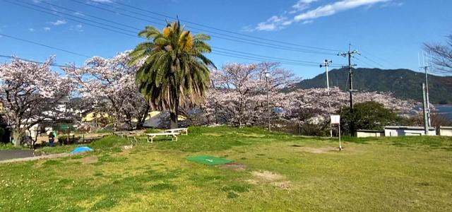 宮浜温泉グラウンドゴルフ場の桜の風景