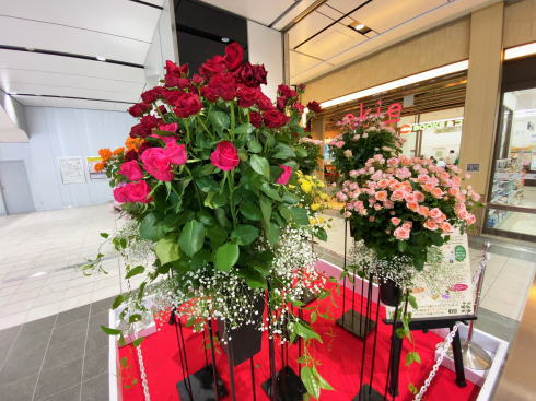 広島駅 コロナの影響受ける花業界から花の展示