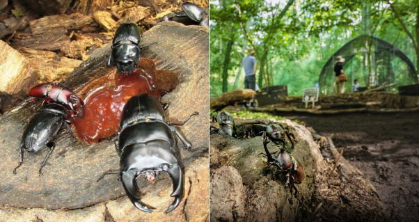 森の巨大虫かご「カブトムシドーム&クワガタハウス」備北丘陵公園で
