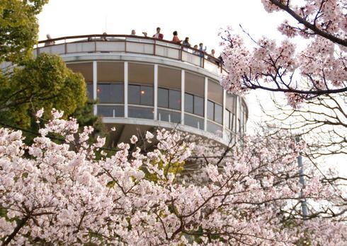 千光寺公園展望台 / 春の様子