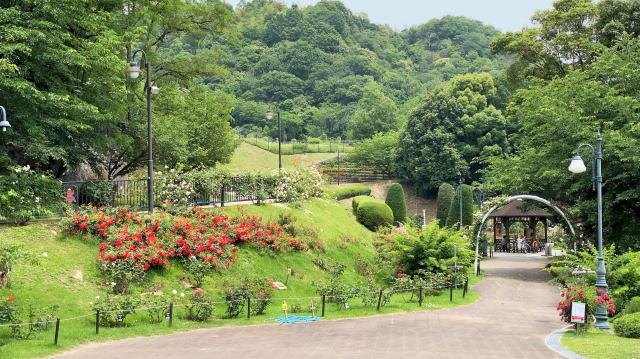 広島市 牛田総合公園バラ園 園内の様子3