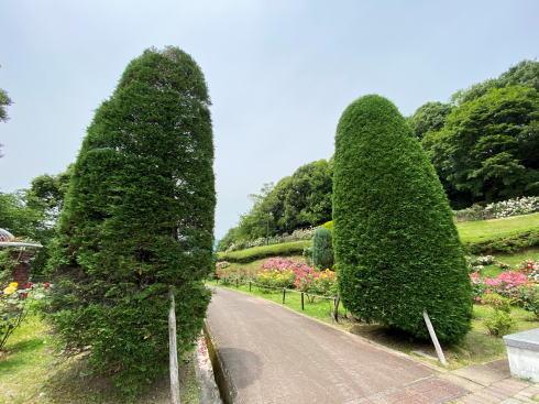 広島市 牛田総合公園バラ園 園内の様子6